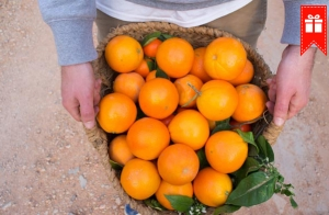 http://oferplan-imagenes.diariovasco.com/sized/images/mandarinas-naranjas-descuento-20141127-300x196.jpg