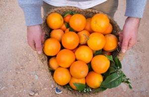 http://oferplan-imagenes.diariovasco.com/sized/images/mandarinas-naranjas-descuento-201501031-300x196.jpg